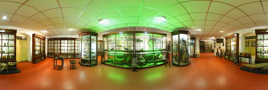 Fr. Gabriel Zoology Museum